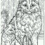кошка раскраска для детей