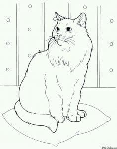кошка рисунок для детей раскраска А4
