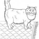 кошка рисунок для детей раскраска