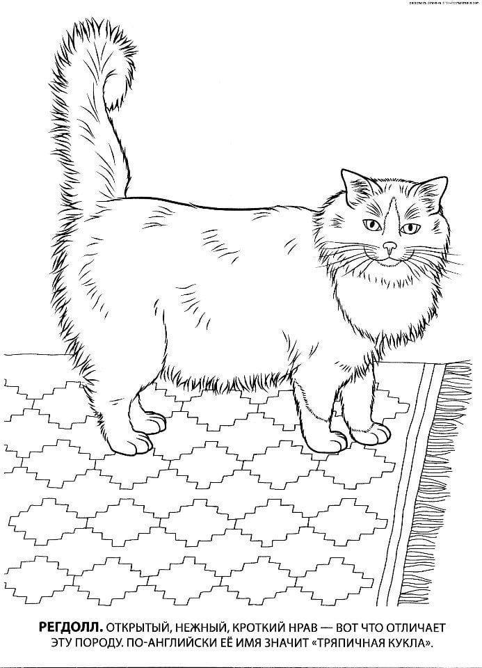 кошка рисунок для детей раскраска - Рисовака
