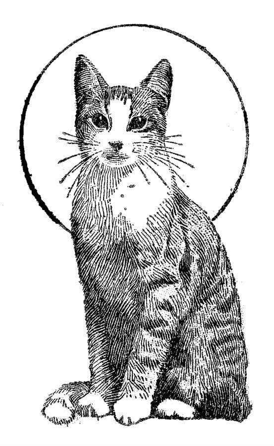 кошки печать раскраски - Рисовака