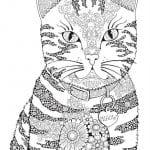 раскраска кошка для детей 2 3 лет