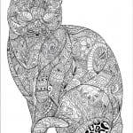 раскраска кошки коты