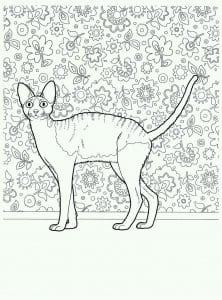 раскраска кошки распечатать бесплатно в хорошем качестве А4