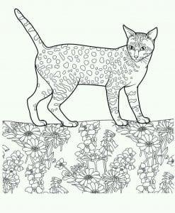 раскраска красивая кошка А4