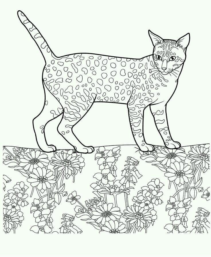 раскраска красивая кошка А4 - Рисовака