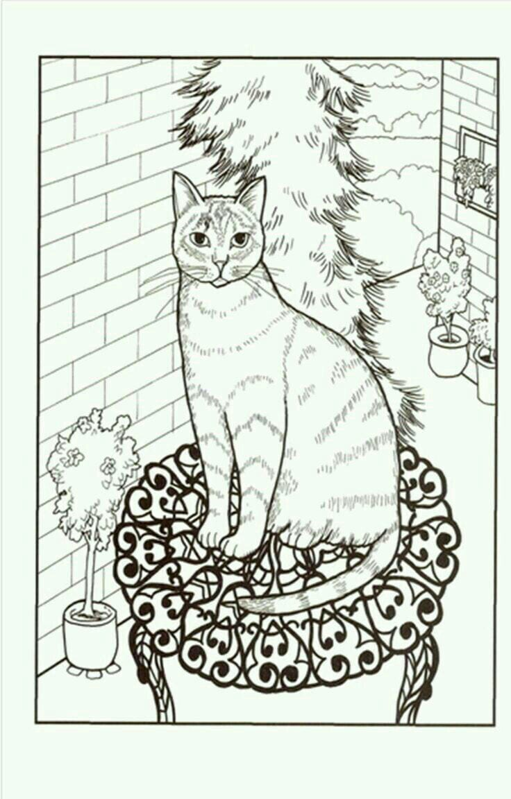 раскраски домашние животные кошки рисовака