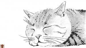рисунок для детей раскраска кошка