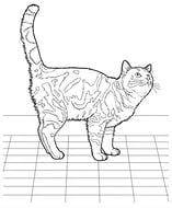 рисунок кошки для раскраски А4