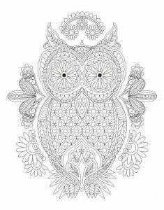 сова раскраска (113)