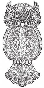 сова раскраска (134)