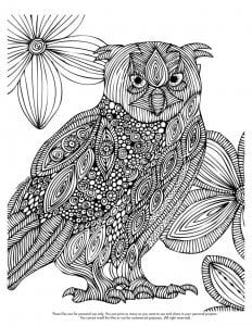сова раскраска (140)
