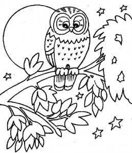 сова раскраска (159)