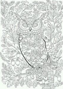 сова раскраска (162)