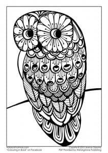 сова раскраска (166)