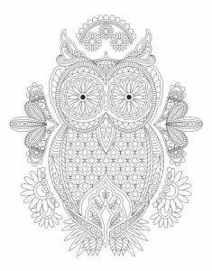 сова раскраска (182)