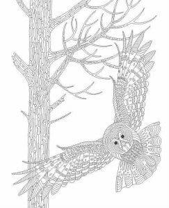 сова раскраска (183)