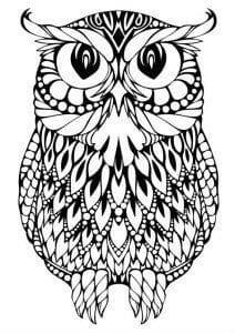 сова раскраска (200)