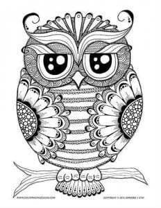 сова раскраска (204)
