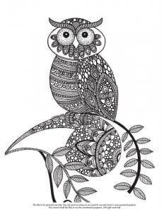 сова раскраска (208)