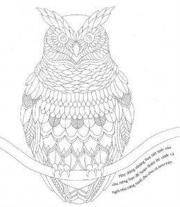 сова раскраска (223)