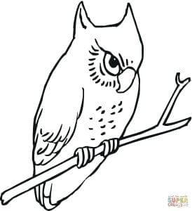 сова раскраска (227)