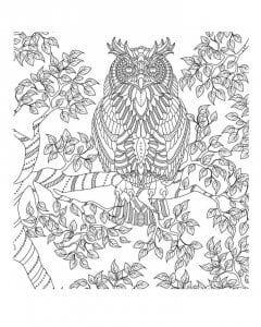 сова раскраска (229)