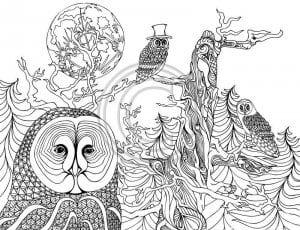 сова раскраска (230)