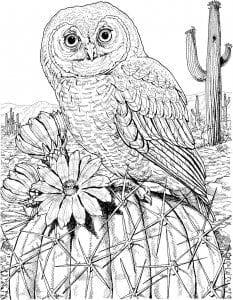 сова раскраска (231)