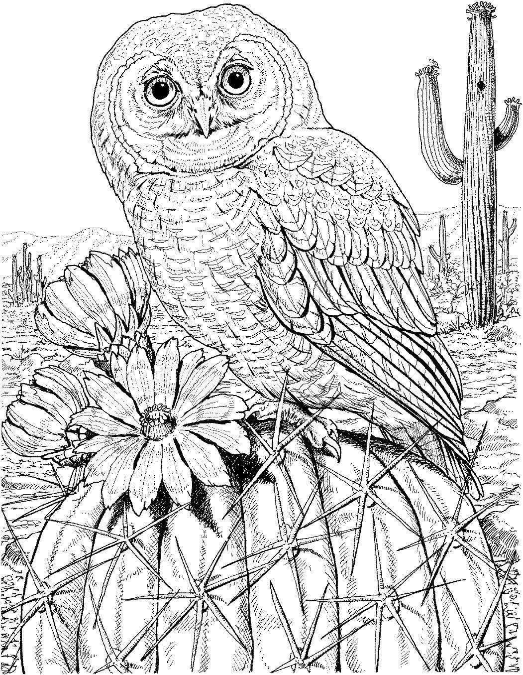 сова раскраска (231) - Рисовака