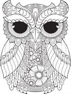 сова раскраска (247)