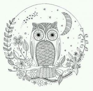 сова раскраска (248)