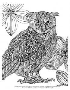 сова раскраска (25)