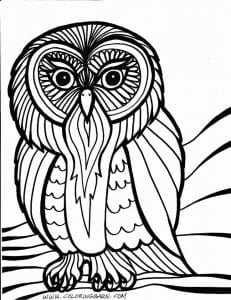 сова раскраска (257)