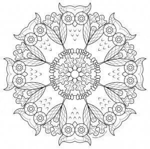 сова раскраска (258)