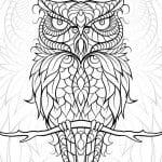 сова раскраска (260)