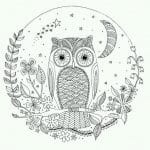 сова раскраска (261)
