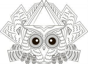 сова раскраска (272)