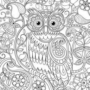 сова раскраска (29)