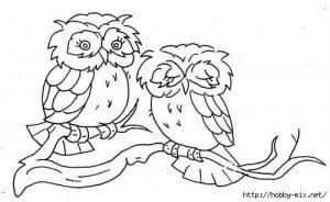 сова раскраска (291)