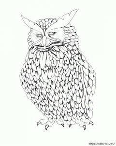 сова раскраска (297)