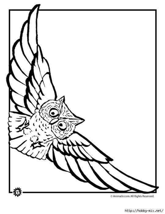 сова раскраска (320)