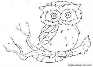 сова раскраска (328)