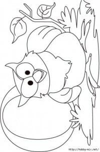 сова раскраска (334)