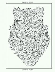сова раскраска (34)