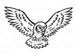 сова раскраска (349)