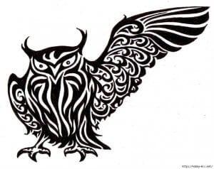сова раскраска (381)