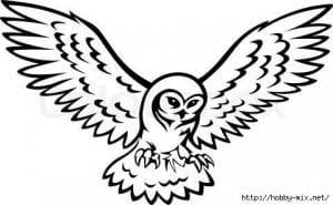 сова раскраска (384)