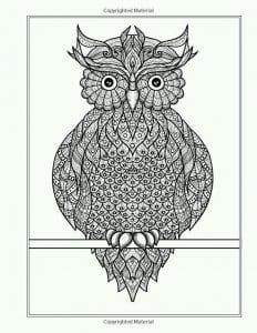 сова раскраска (39)