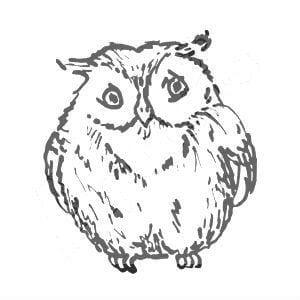 сова раскраска (409)